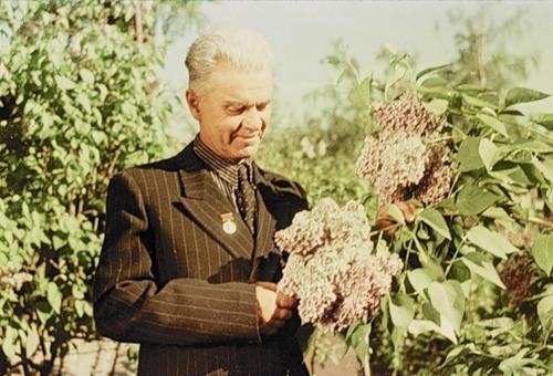 Фронтовик и талантливый селекционер-самоучка Леонид Колесников, посвятивший выведению сирени всю свою жизнь, создал коллекцию сортов, назвав их в честь событий и героев войны.