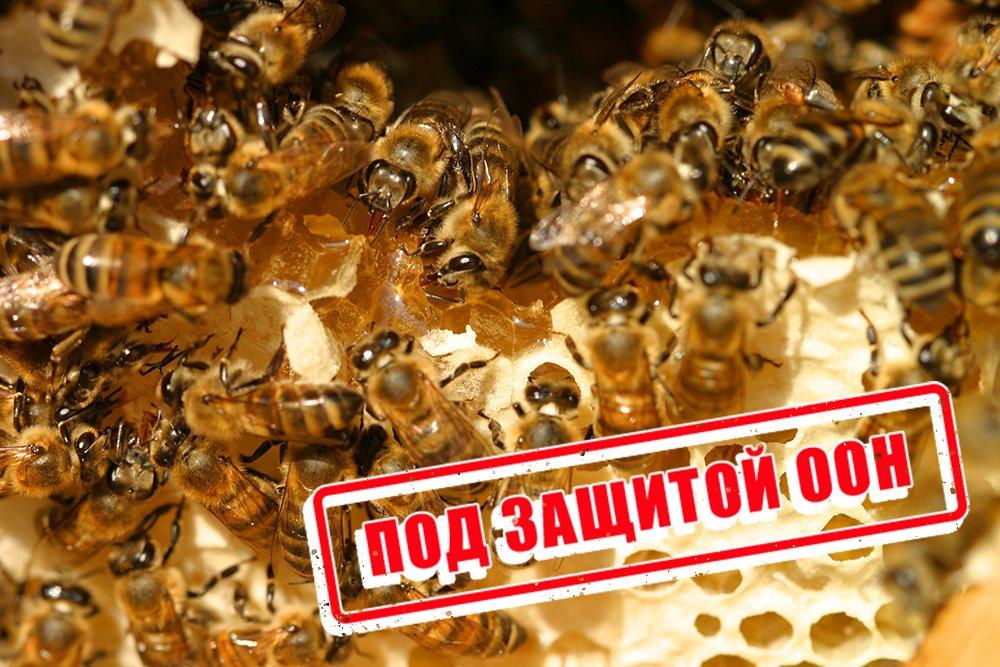 В Перми откроют самый большой памятник пчеле