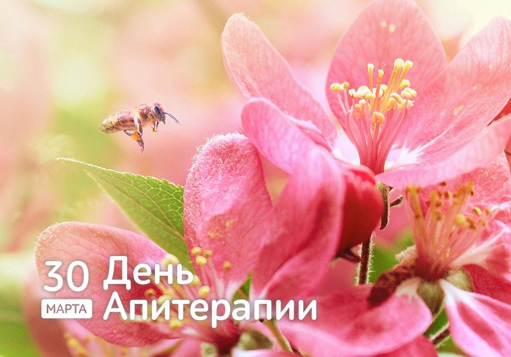 Здоровье дарят пчёлы