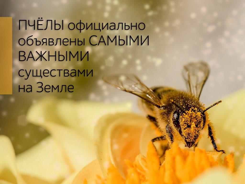 Пчёлы официально объявлены самыми важными существами на Земле