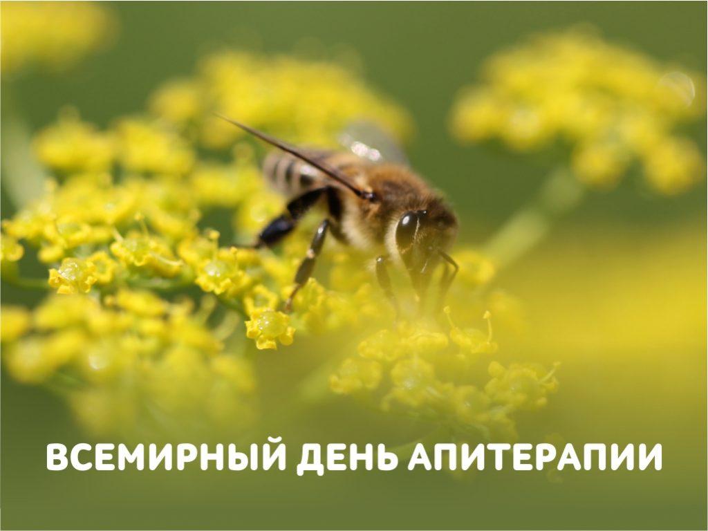 Как ТЕНТОРИУМ® приручил пчелу. Апитерапия от А до Я