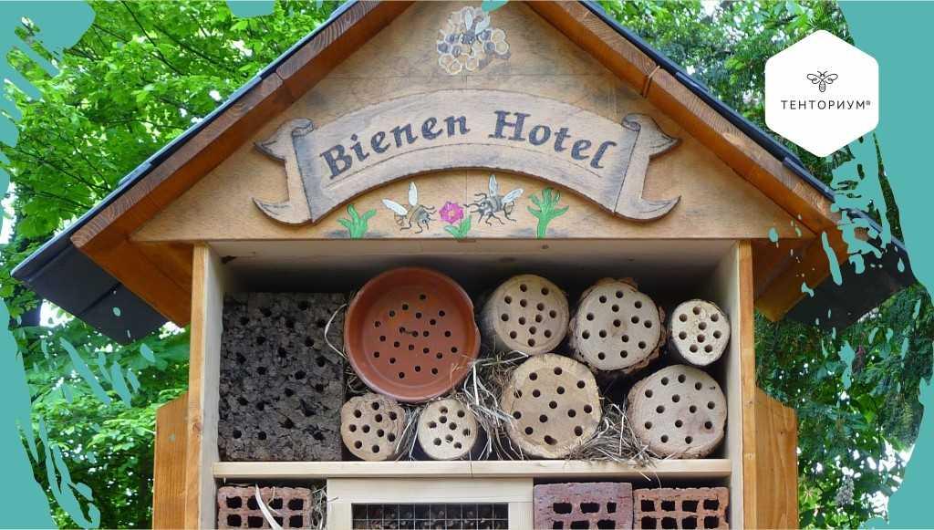 Как помочь пчёлам: 5 простых и эффективных способов поддержать чудесных созданий