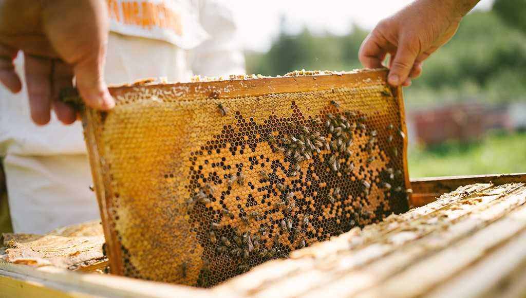 Лучше лекарств. Учёные доказали - мёд при простуде может быть эффективнее антибиотиков