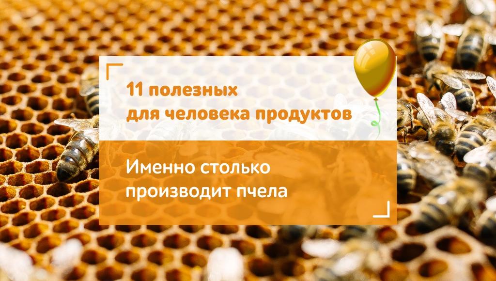 Почему нужно беречь пчёл? 8 фактов о крылатых труженицах в цифрах