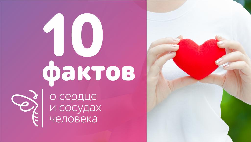 10 фактов о сердце и сосудах, которые нужно знать, чтобы жить долго
